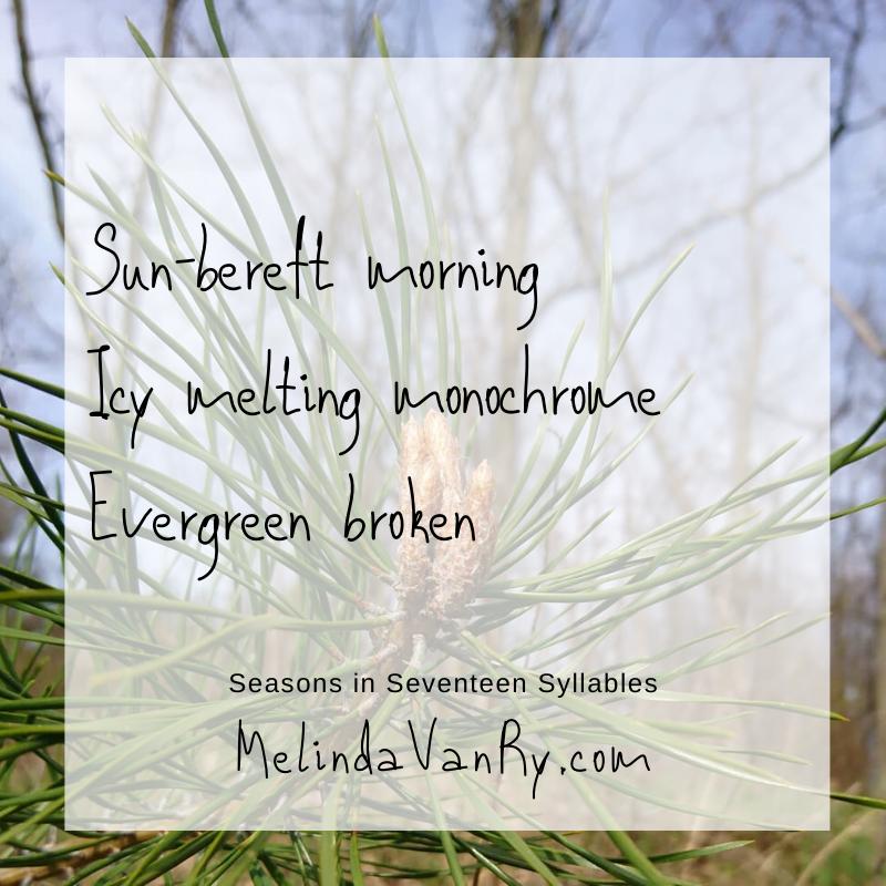 Sun-bereft morning Icy melting monochrome Evergreen broken